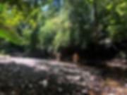 Forest hike.jpg