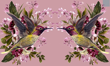 hummingbird_REFLECTIONS.png