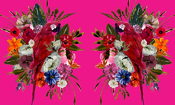 PARROT_REFLECTIONS_compressed (1).png