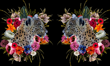 LEOPARD_REFLECTIONS_compressed.png