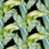 Banana Leaf_edited.jpg