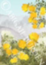 crnew yellow roses landscape 2.jpg