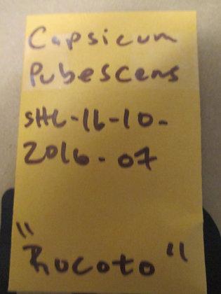 """Capsicum pubescens ~ """"Rocoto"""""""