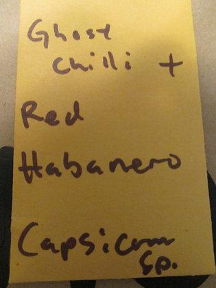 """Capsicum sp. ~ """"Ghost Chili"""" + """"Red Habanero"""""""