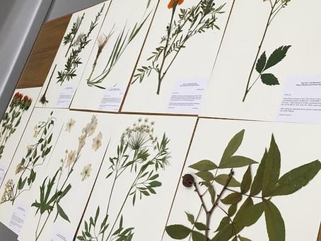 Botanical Collection Form & Ethnobotanical Description