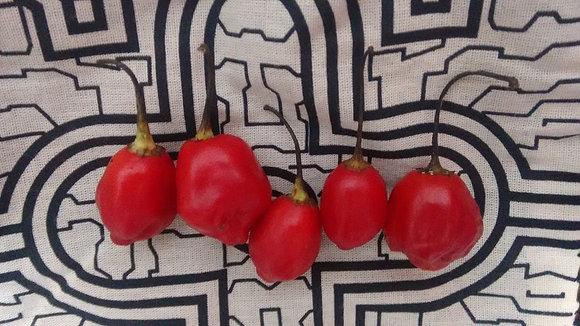 """Capsicum baccatum ~ """"Red Inca"""""""
