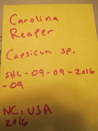 """Capsicum chinense ~ """"Carolina Reaper"""""""