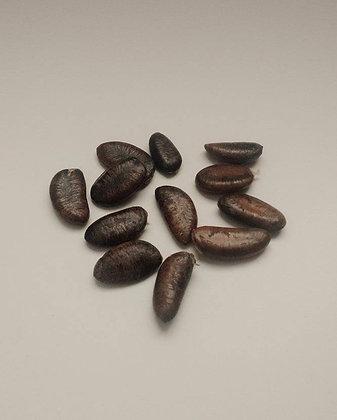 "Asimina triloba ~ ""Paw-Paw"" Seeds"