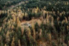 Paysage foret alpes.jpg