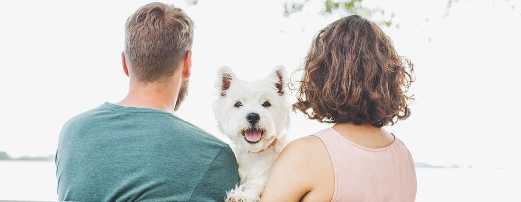spazieren mit Hund