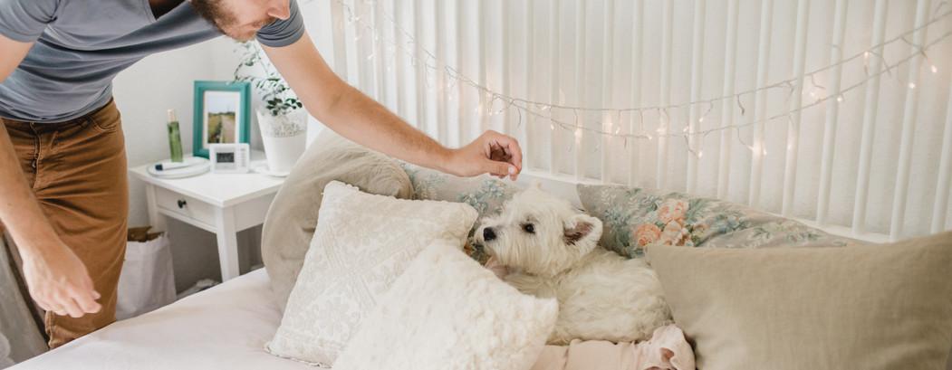 Hunde Day Care