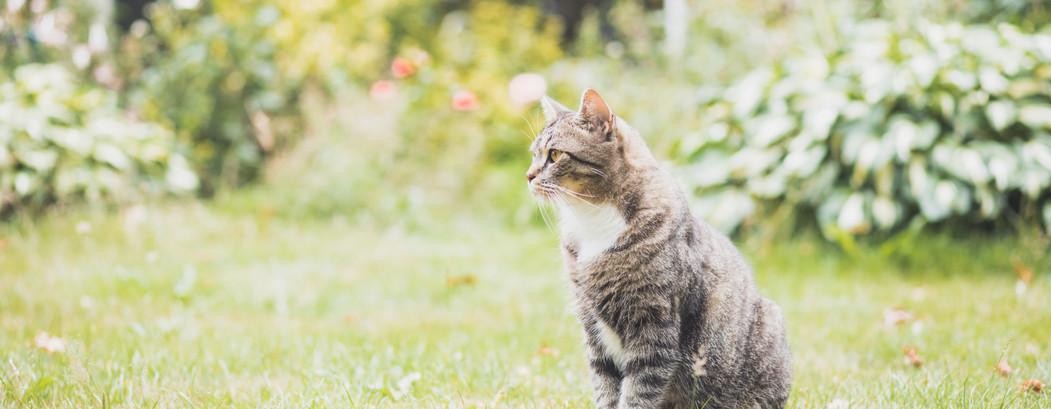 Katzeliebhaber