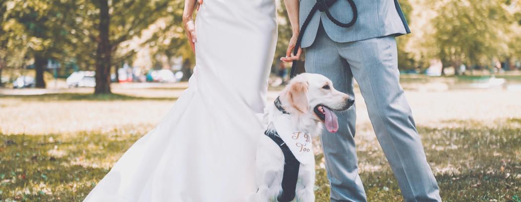 Wedding Dogsitting