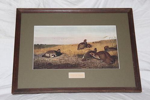 Archibald Thorburn English Partridge Barley Stubble Print