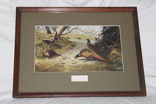 Archibald Thorburn Pheasants relax in the covert Print