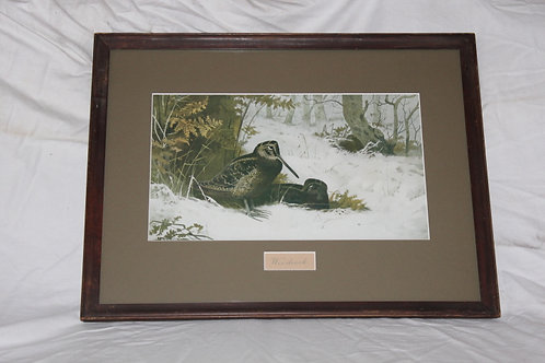 Archibald Thorburn Woodcock King of the Woods Print