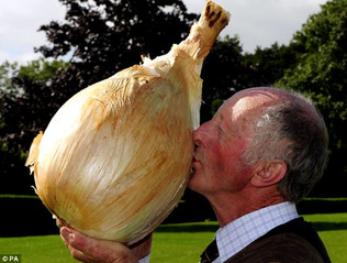 Just How Big Is This Onion Anyway?