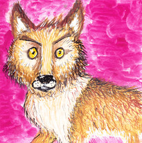 Coyote Not So Ugly