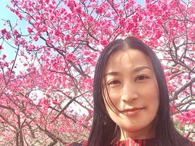 寒緋桜🌸満開
