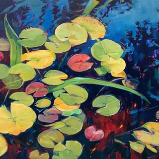 Andover Waterlilies
