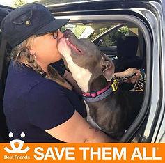 Best Friends Pit Bull Kisses