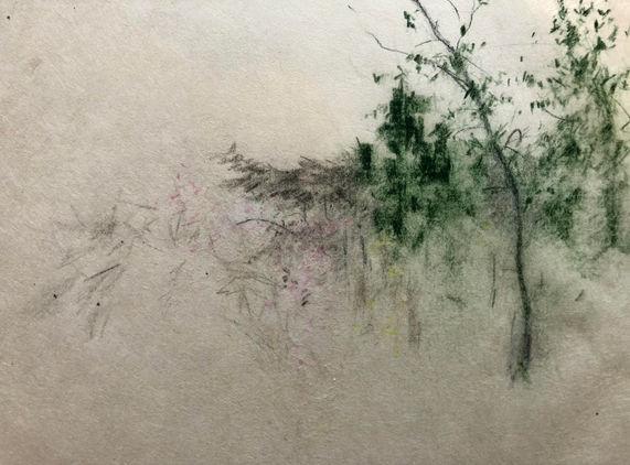 Pine and Blossom