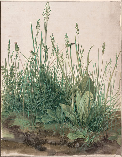 Durer, Great Piece of Turf.jpg