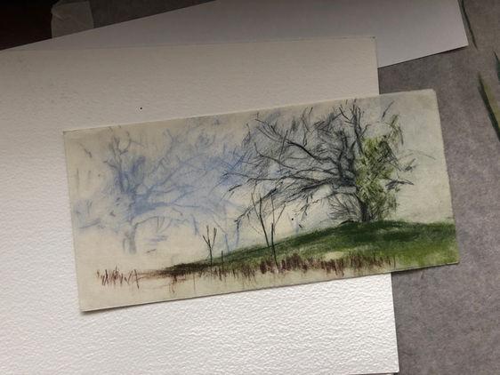 Tree, Hampstead Heath