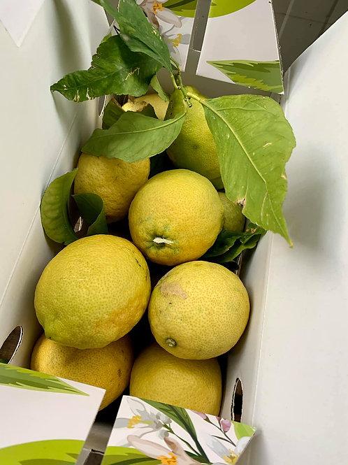 Amalfi parti citrom