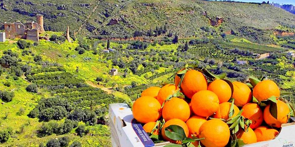 Narancsszüret és Szicília rejtett kincsei