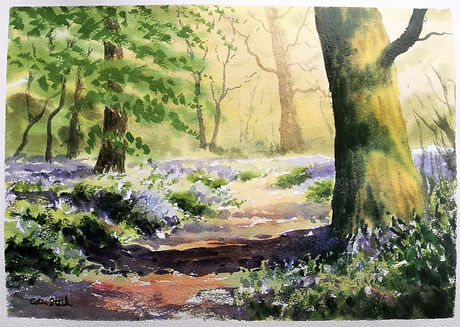 Bluebell Wood..jpg