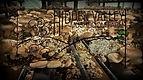 Hidden valley mushrooms.jpg