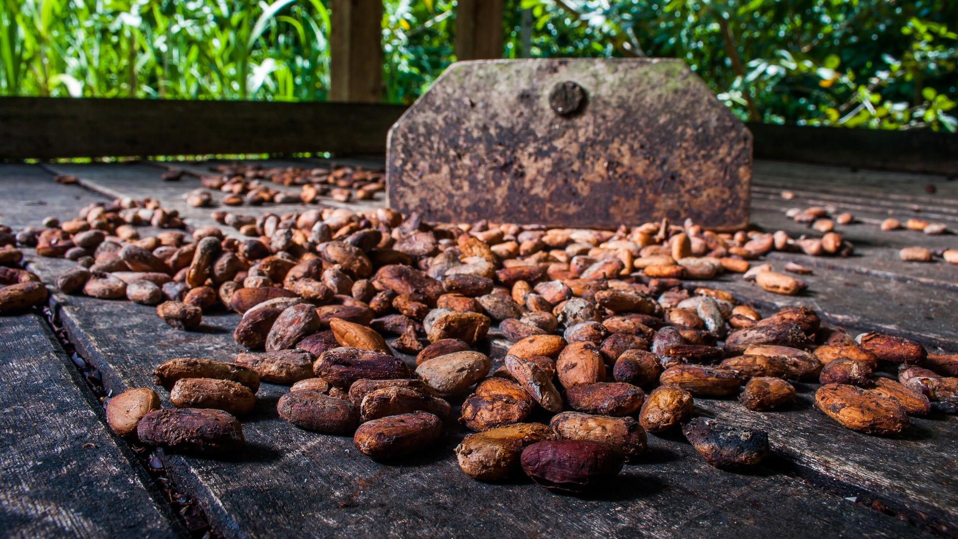 Le cacao vu par la chocolaterie de GNAW