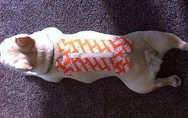 Ομοιοπαθητική | κτηνιατρική | ανθοθεραπεια |Animal Therapy