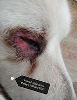 animal alternative therapy