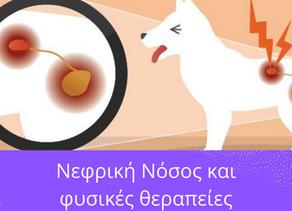 Νεφρική Νόσος και φυσικές θεραπείες