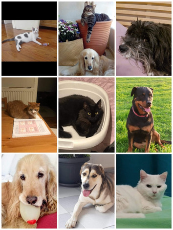 clients animal alternative therapy