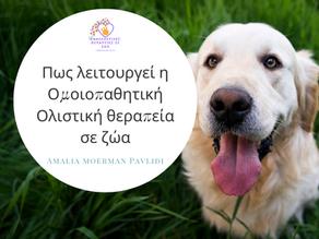 Πως λειτουργεί η Ομοιοπαθητική- Ολιστική θεραπεία σε ζώα