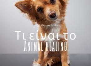 Τί είναι το Animal healing?