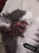 Animal Alternative Therapies