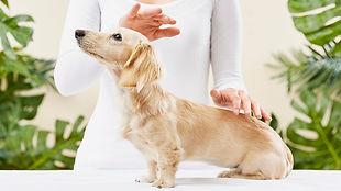 Ομοιοπαθητική   κτηνιατρική   ανθοθεραπεια   Animal Therapy