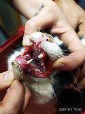 Ομοιοπαθητική | κτηνιατρική | ανθοθεραπεια | Ανθοιάματα Μπαχ |Animal Therapy