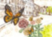 butterfly-1024x725.jpeg