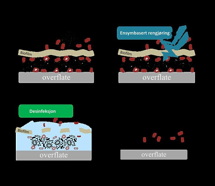 enzymbasert rengjøring tema.png