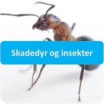 insekter.png