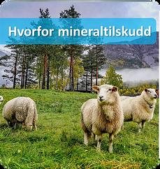 hvorfor mineraltilskudd.png