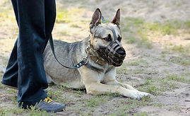 How-to-get-your-dog-used-to-a-muzzle-102