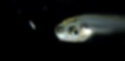 larva40006-636x310.png