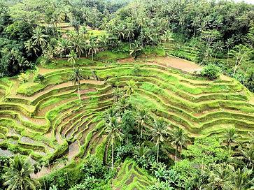 Affordable Villa for Rent Ubud Bali