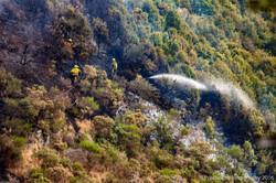 Te Marua Rural Fire 9079